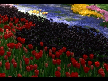 Laleler_Sumbuller_Tulips_Hyacinths_Bl08_FatihGelincik