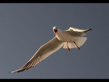 Martilar_Ses&Ofke_Seagulls_Sound&Fury_Bl01_FatihGelincik