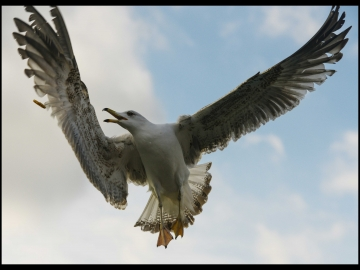 Martilar_Ses&Ofke_Seagulls_Sound&Fury_Bl06_FatihGelincik