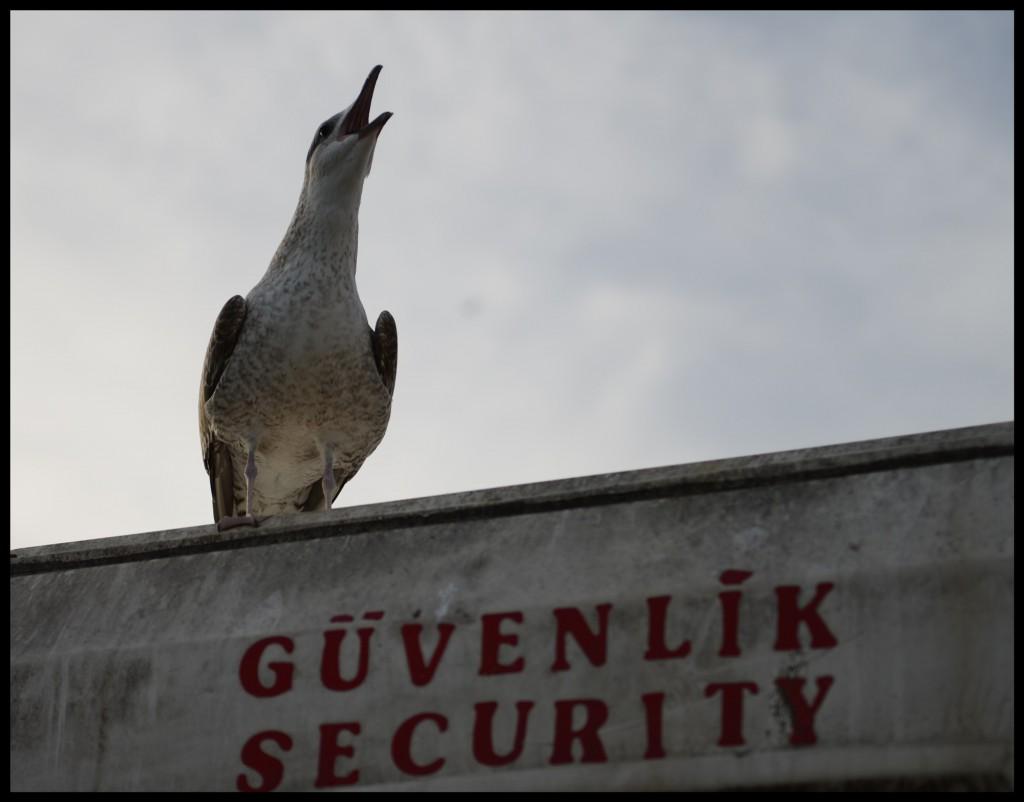 Güvenlik_Görevlisi_FatihGelinciks