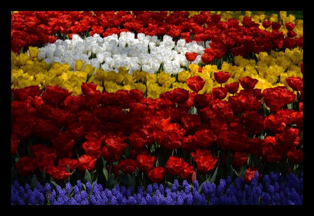 Laleler_Sumbuller_Tulips_Hyacinths_Bl07_FatihGelincik