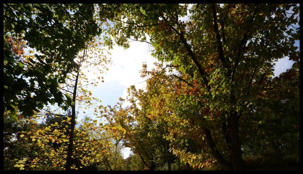 bir_demet_sonbahar_autumn_bouquet_bl01_fatihgelincik