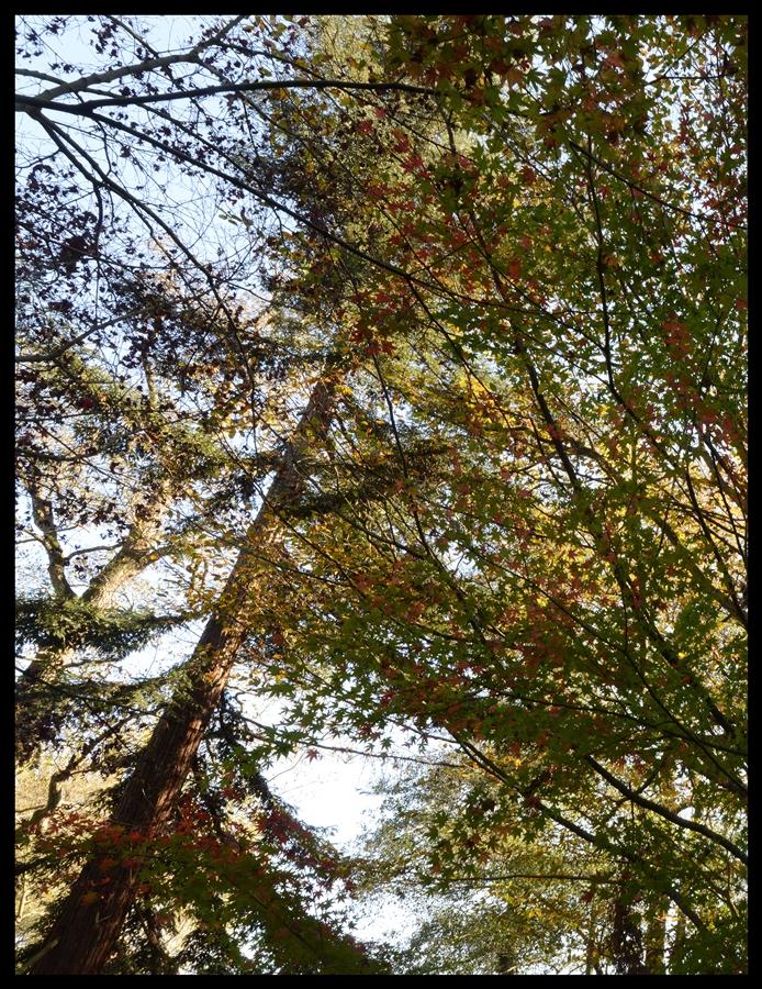 bir_demet_sonbahar_autumn_bouquet_bl02_fatihgelincik